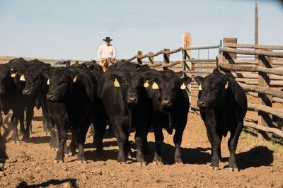 Ranchers sue major meatpackers