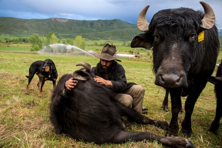 One rancher's plan to establish water buffalo in Colorado (Where the