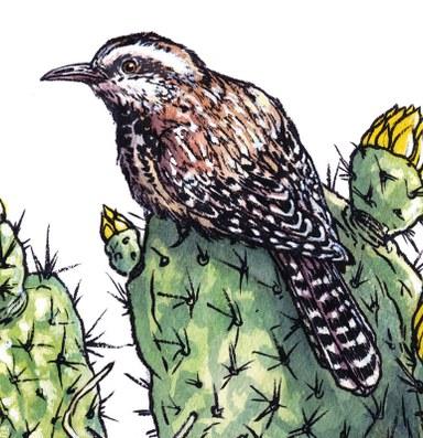 The pocket birding book gets a makeover