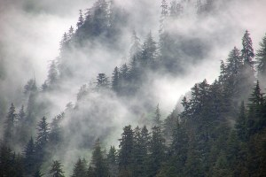 Trump administration pushes to exempt Tongass from logging restrictions