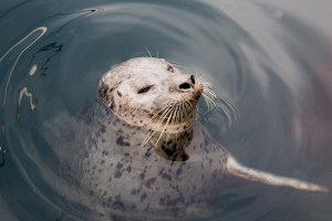Antibiotic resistance is spreading among marine mammals
