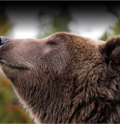 Grizzlies and the limits of coexistence