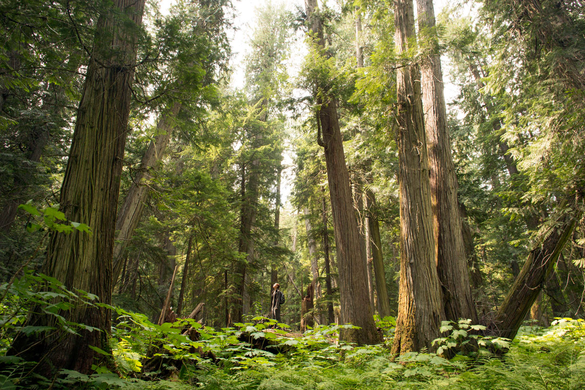Glimpse Inside The Last Inland Temperate Rainforest  U2014 High