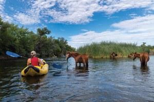 Arizona's wild horse paradox