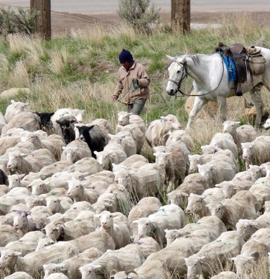 Migrant labor activists win lawsuit for foreign shepherds