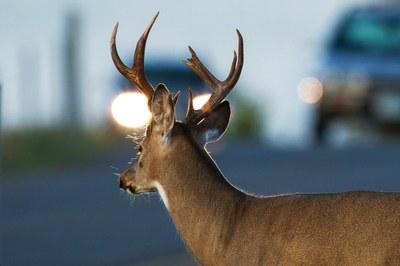 When wildlife safety turns into fierce political debate