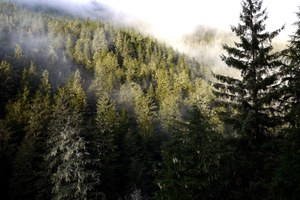 Trump administration chops logging restrictions in the Tongass National Forest