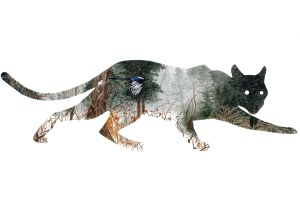 The mystery of mountain lions