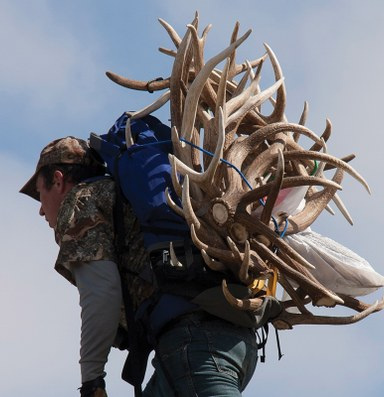 Is shed hunting ethical?