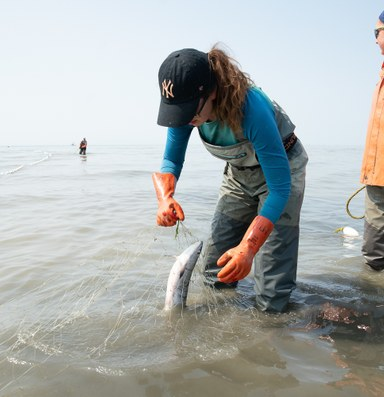 Climate change has setnetters worried about Alaska's sockeye