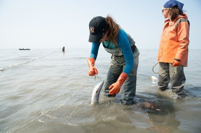 Climate change has setnetters worried about Alaska's sockeye