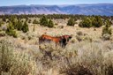 Under Biden, the BLM backtracks on Hammond grazing permit