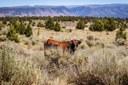 Under Biden, the BLM backtracks on Hammond grazing permit