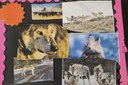 Second-graders take on Colorado's wolf reintroduction