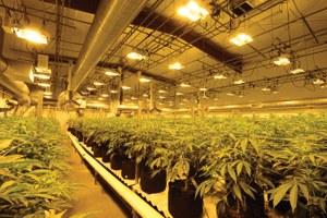 Cannabis has a carbon problem