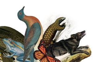 Species conservation is a human problem