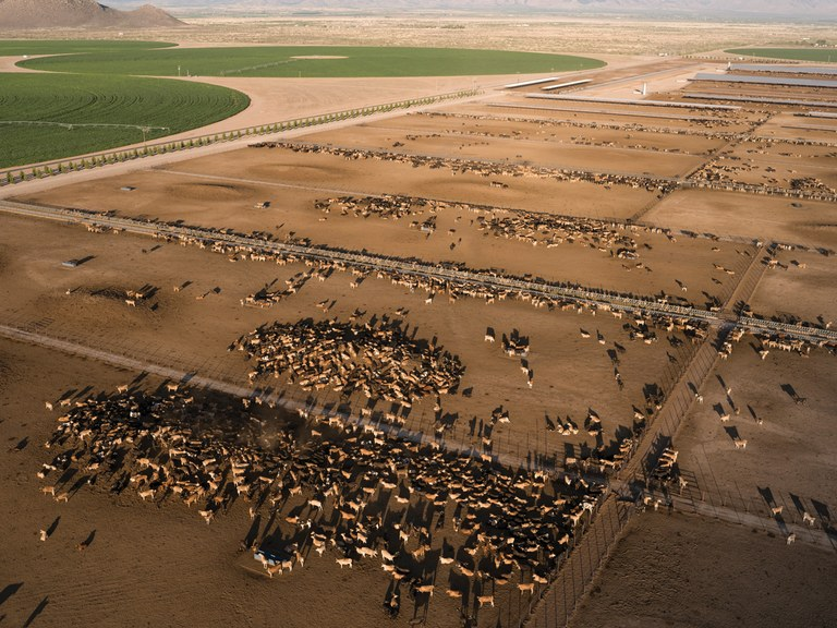 A mega-dairy is transforming Arizona's aquifer and farming lifestyles
