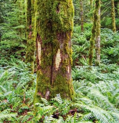 Tree DNA thwarts black market lumber