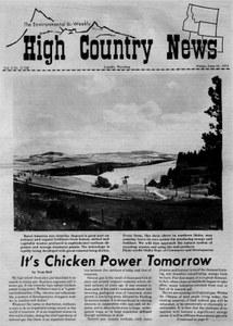 It's chicken power tomorrow