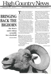 Bringing back the bighorn