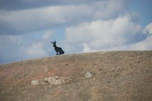 Of Western myth and jackalopes