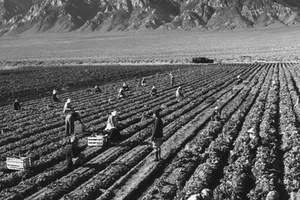 Female farmworkers are the most vulnerable
