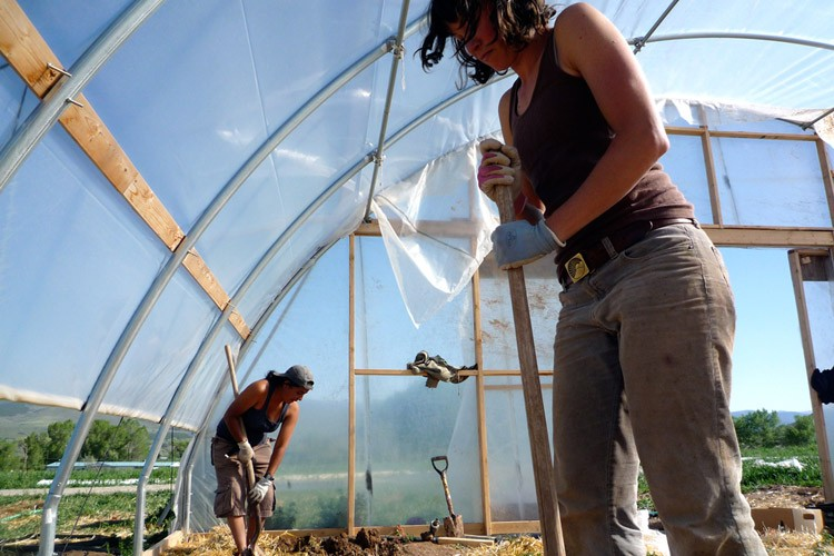 Interns work at a farm in Paonia, Colo.
